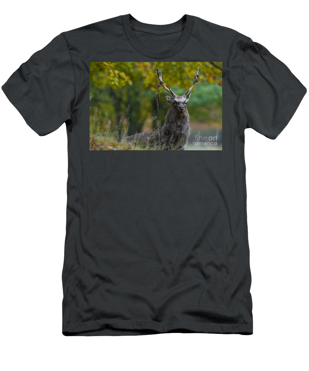 Sika Deer Men's T-Shirt (Athletic Fit) featuring the photograph 110307p070 by Arterra Picture Library