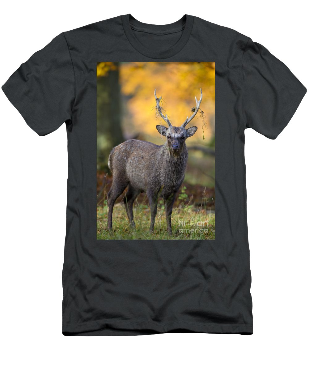 Sika Deer Men's T-Shirt (Athletic Fit) featuring the photograph 110307p072 by Arterra Picture Library