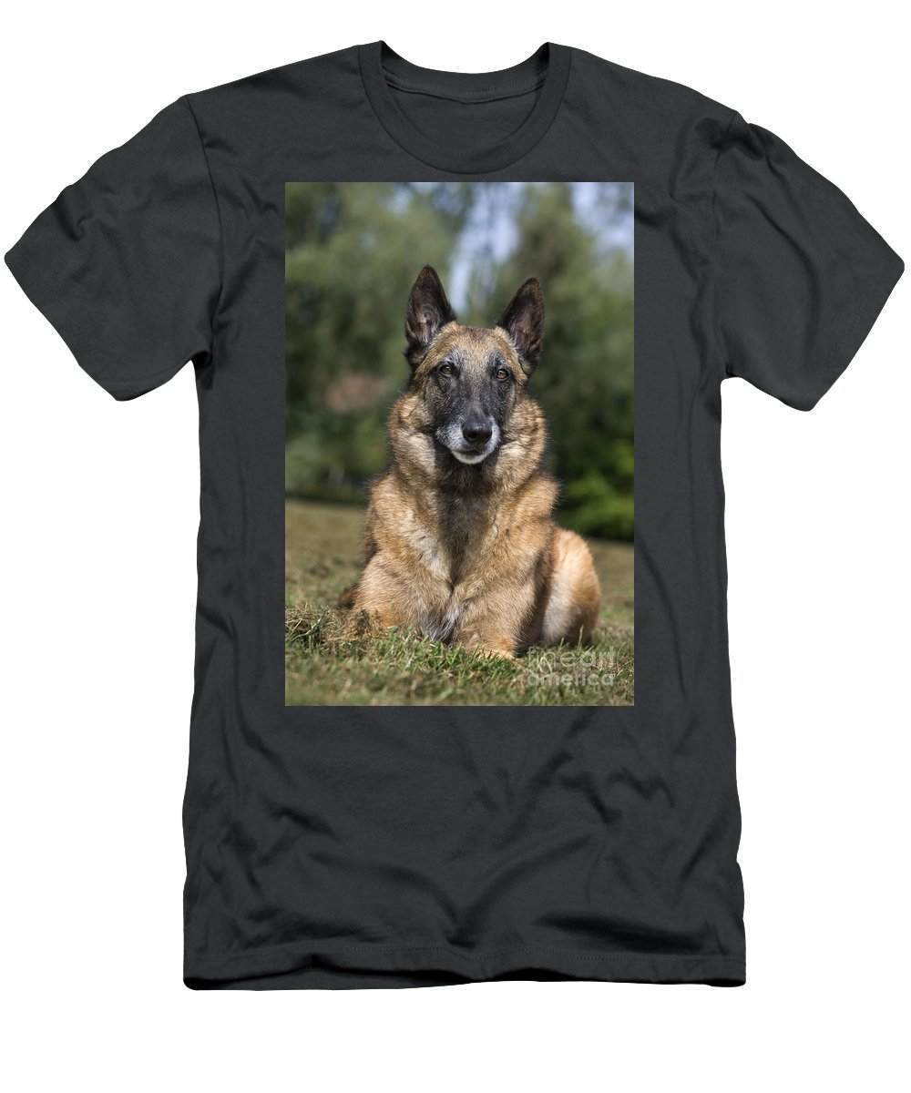 Belgian Shepherd Dog Men's T-Shirt (Athletic Fit) featuring the photograph 110506p117 by Arterra Picture Library