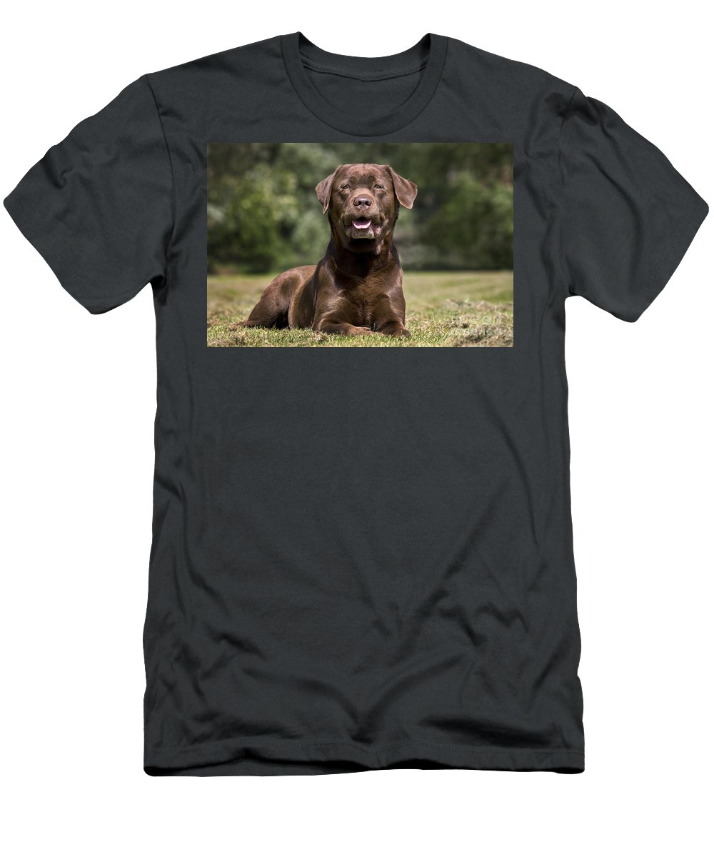 Mammal Men's T-Shirt (Athletic Fit) featuring the photograph 110506p185 by Arterra Picture Library