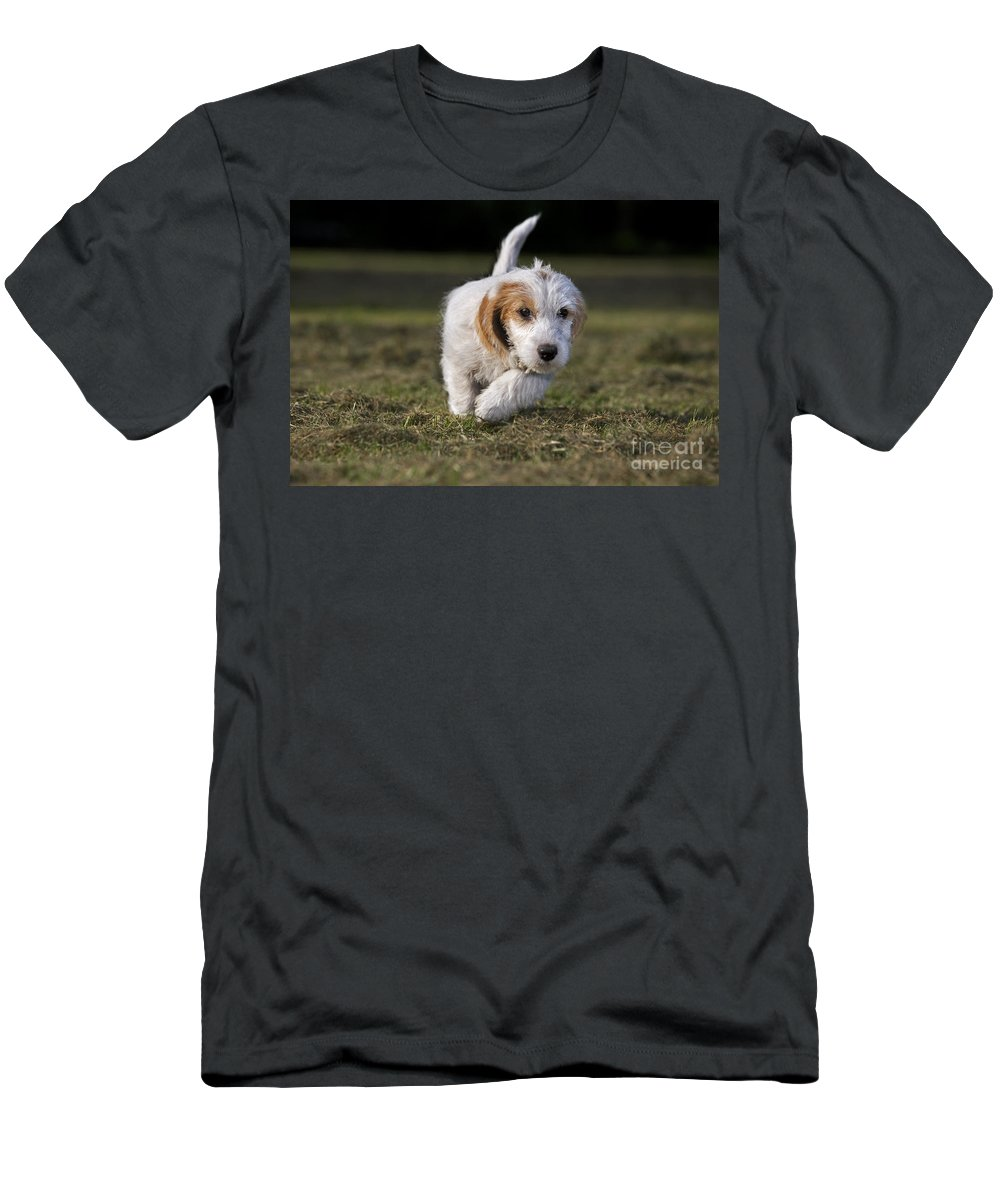 Mammal Men's T-Shirt (Athletic Fit) featuring the photograph 110506p208 by Arterra Picture Library