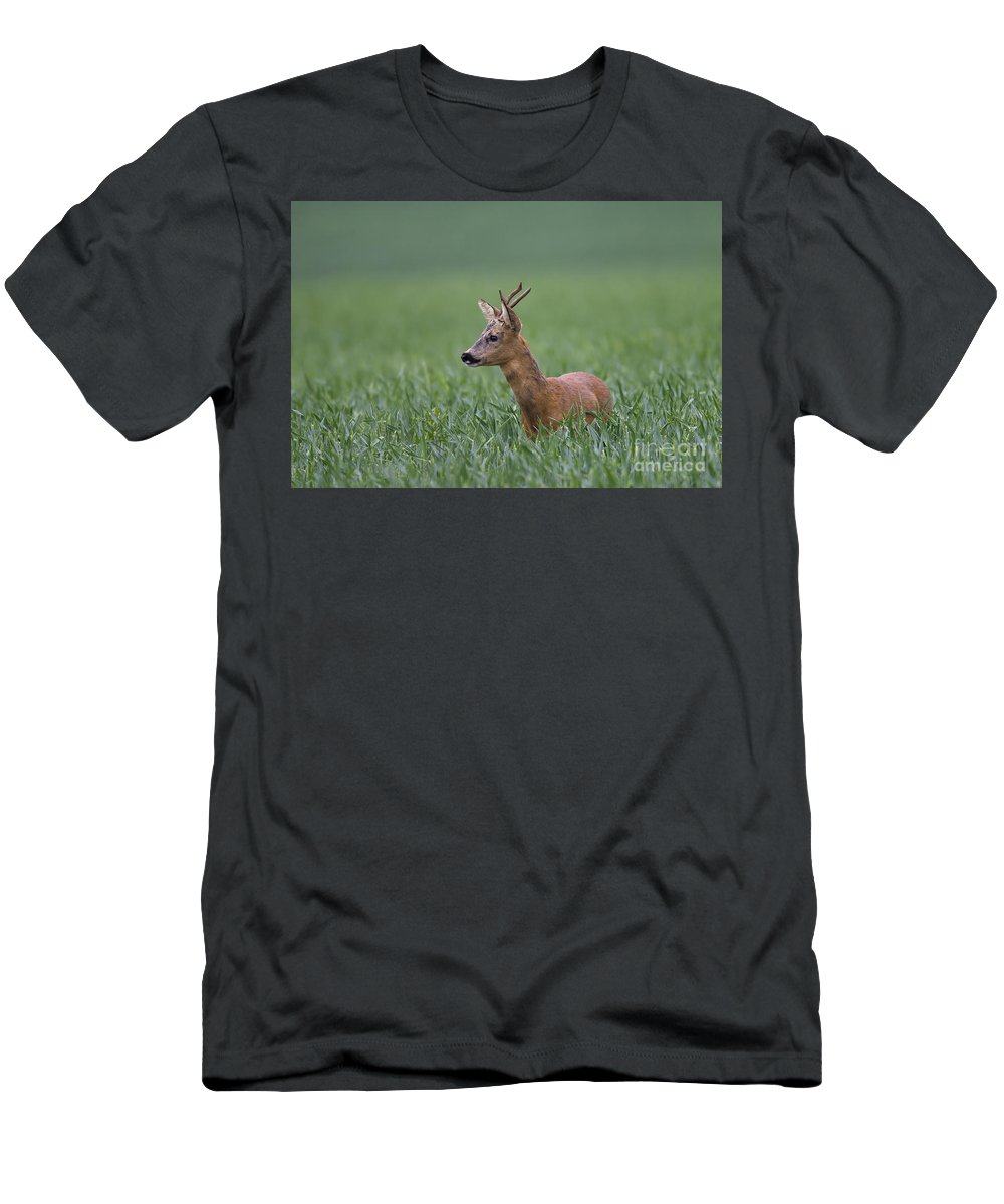 Roe Dee Men's T-Shirt (Athletic Fit) featuring the photograph 110714p320 by Arterra Picture Library