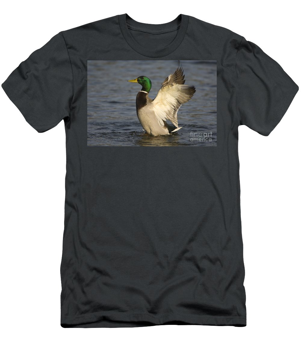 Nature Men's T-Shirt (Athletic Fit) featuring the photograph Mallard Duck by John Shaw