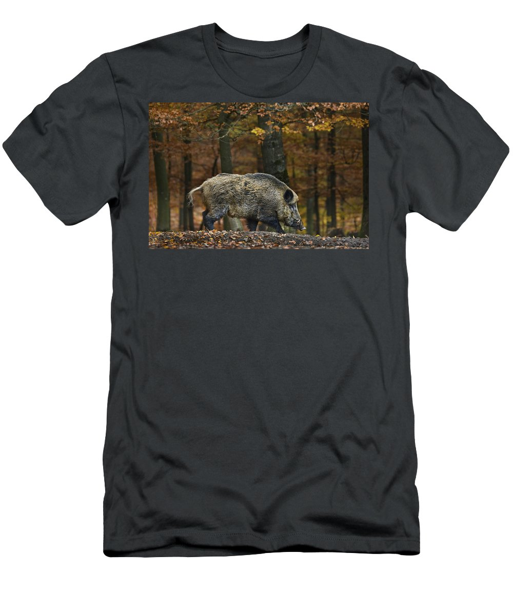 Wild Boar Men's T-Shirt (Athletic Fit) featuring the photograph 121213p284 by Arterra Picture Library