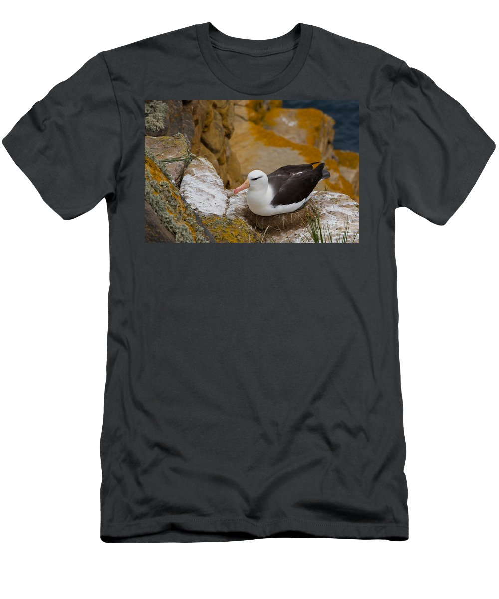 Black-browed Albatross Men's T-Shirt (Athletic Fit) featuring the photograph Black-browed Albatross by John Shaw