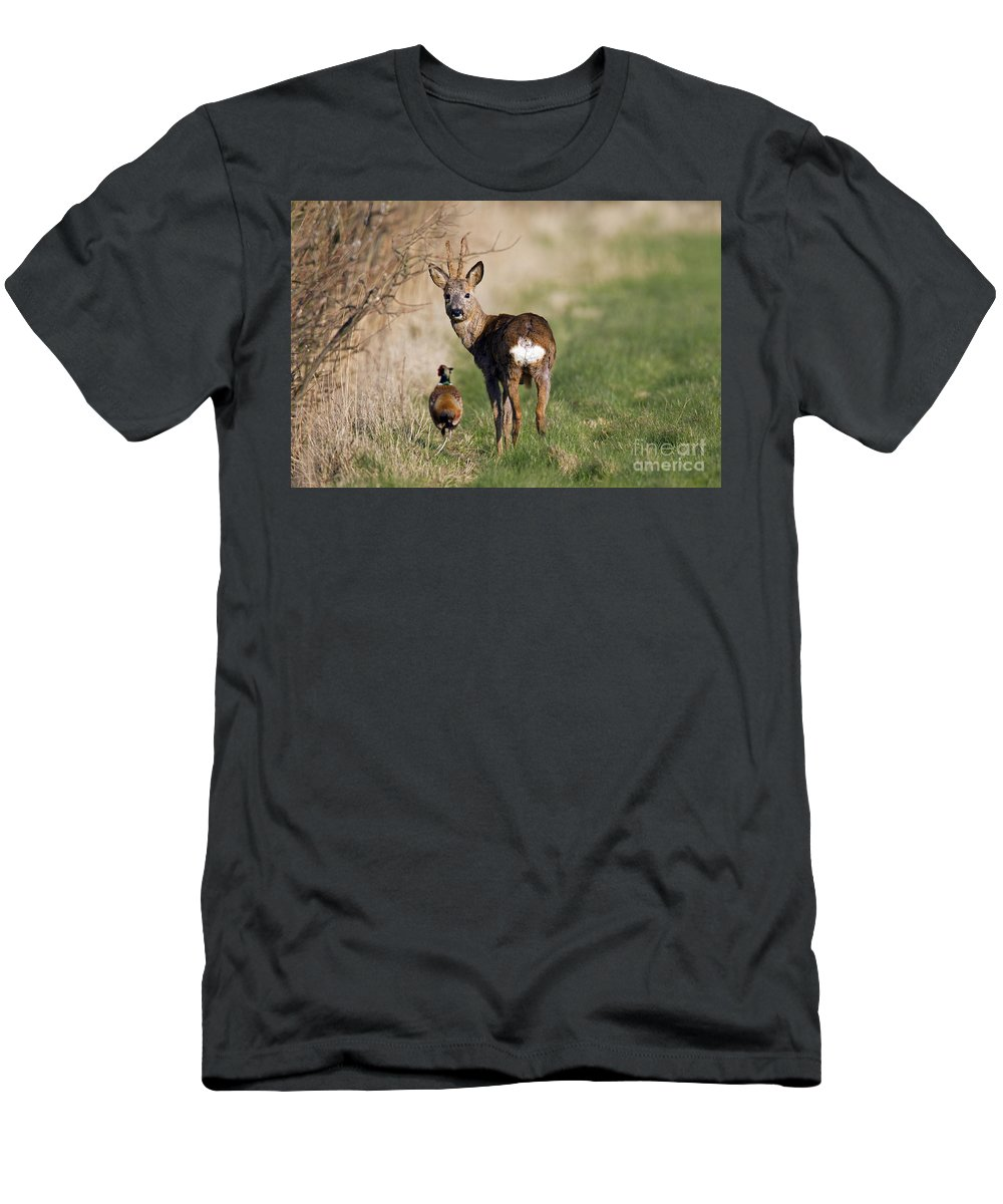Common Pheasant Men's T-Shirt (Athletic Fit) featuring the photograph 130201p187 by Arterra Picture Library