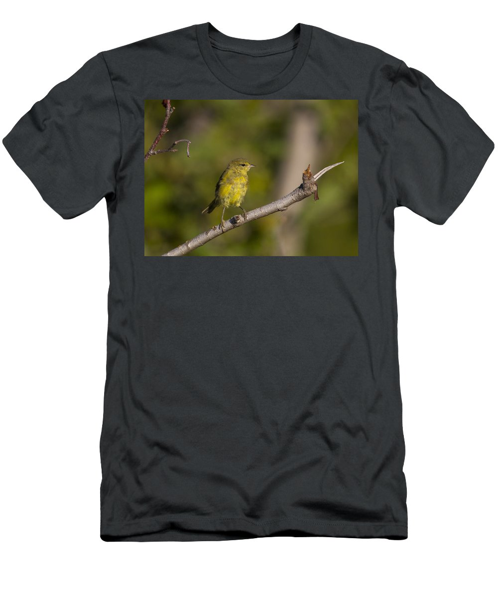 Doug Lloyd Men's T-Shirt (Athletic Fit) featuring the photograph Orangecrowned Warbler by Doug Lloyd