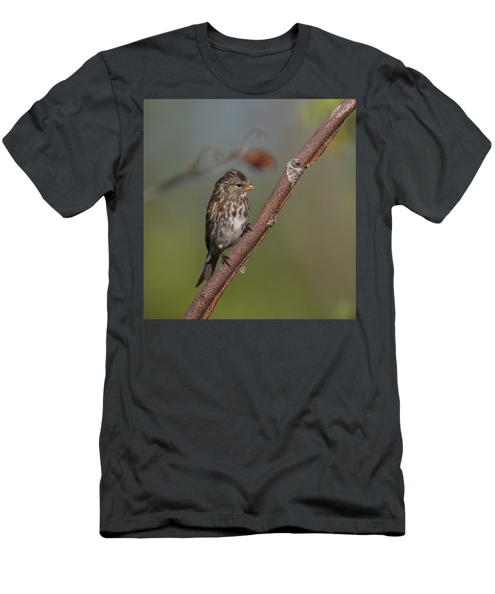 Doug Lloyd Men's T-Shirt (Athletic Fit) featuring the photograph Common Redpoll by Doug Lloyd