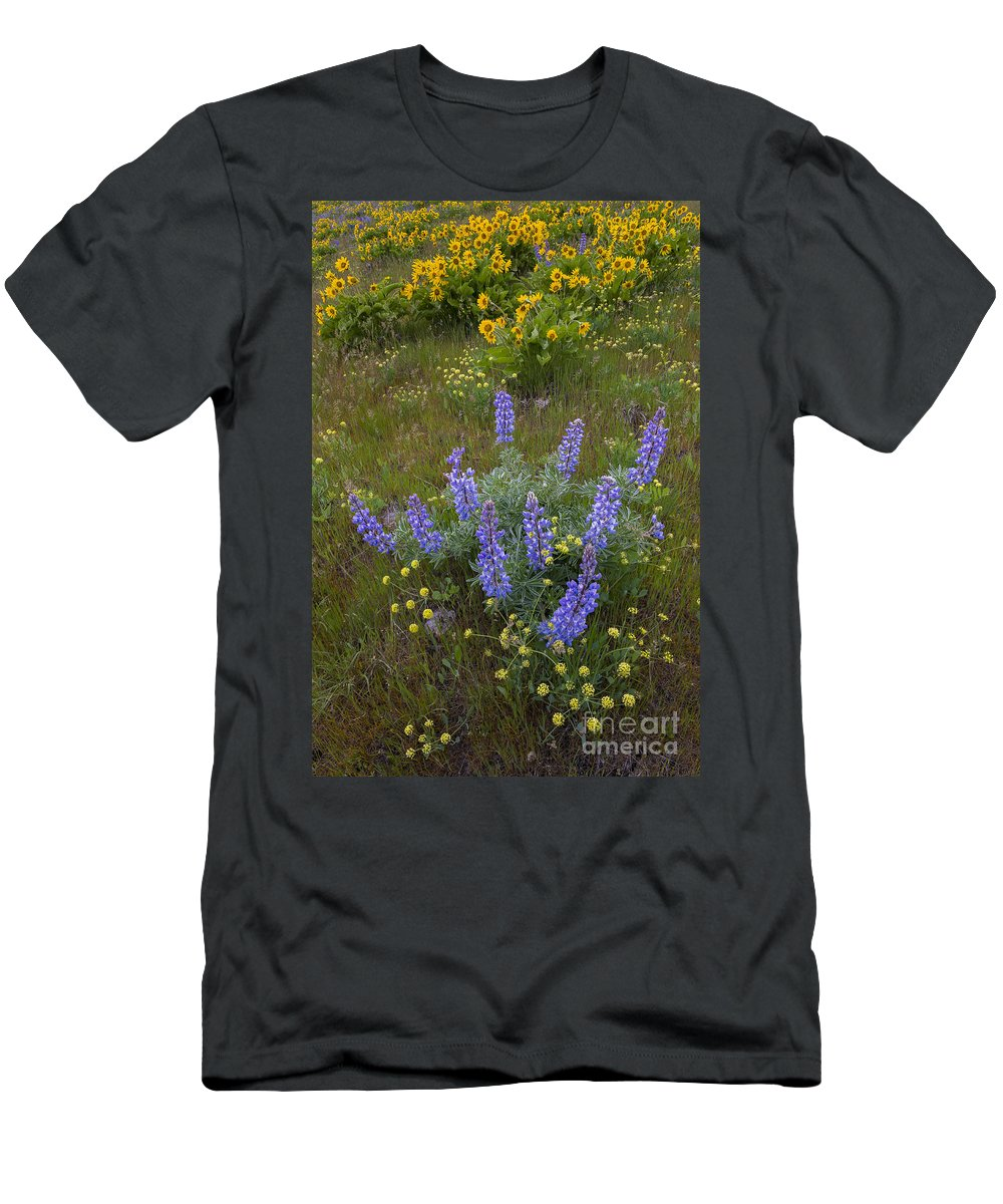 America Men's T-Shirt (Athletic Fit) featuring the photograph Arrowleaf Balsamroot And Lupine by John Shaw