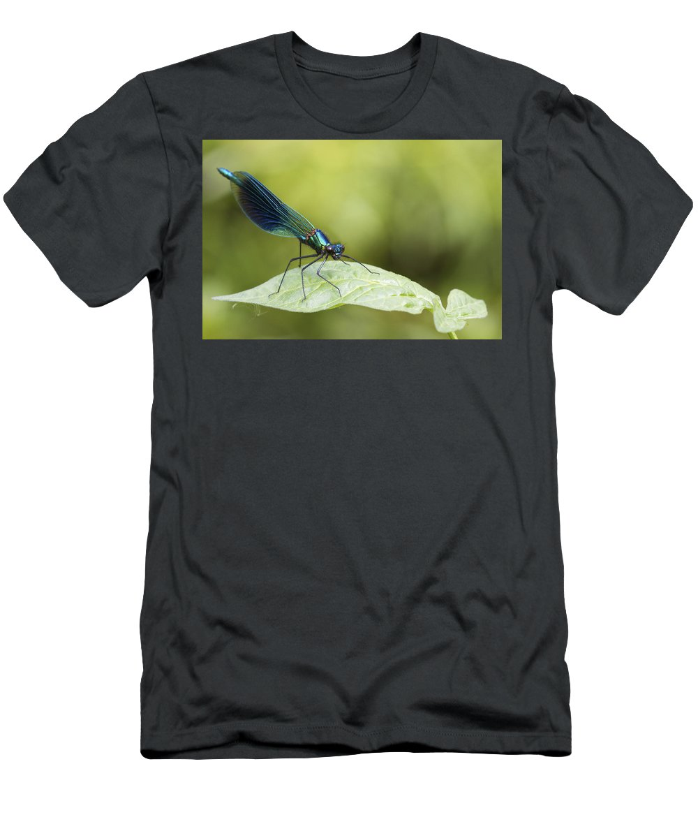 Banded Demoiselle Men's T-Shirt (Athletic Fit) featuring the photograph Banded Demoiselle Digital Art by Chris Smith