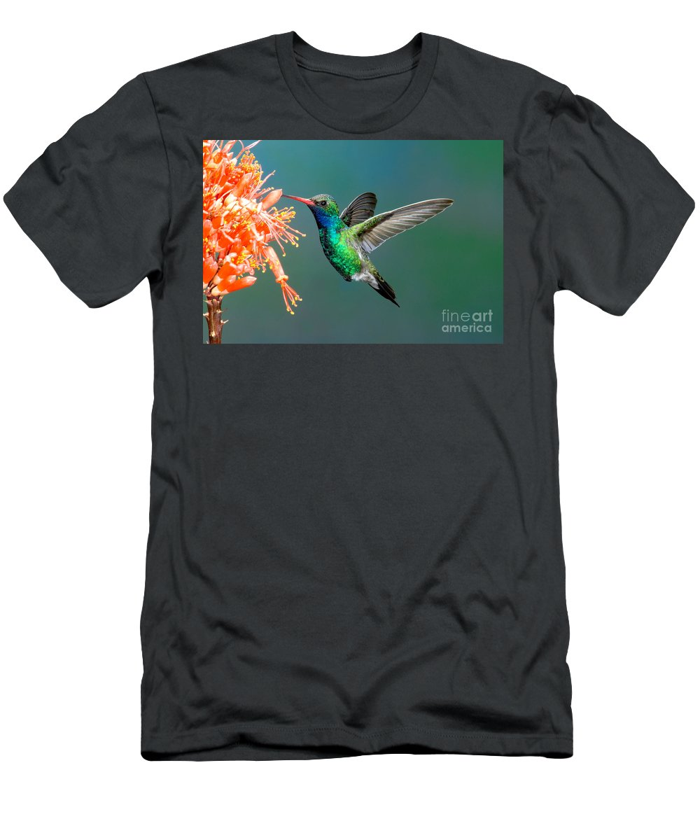 Fauna Men's T-Shirt (Athletic Fit) featuring the photograph Broad-billed Hummingbird At Ocotillo by Anthony Mercieca