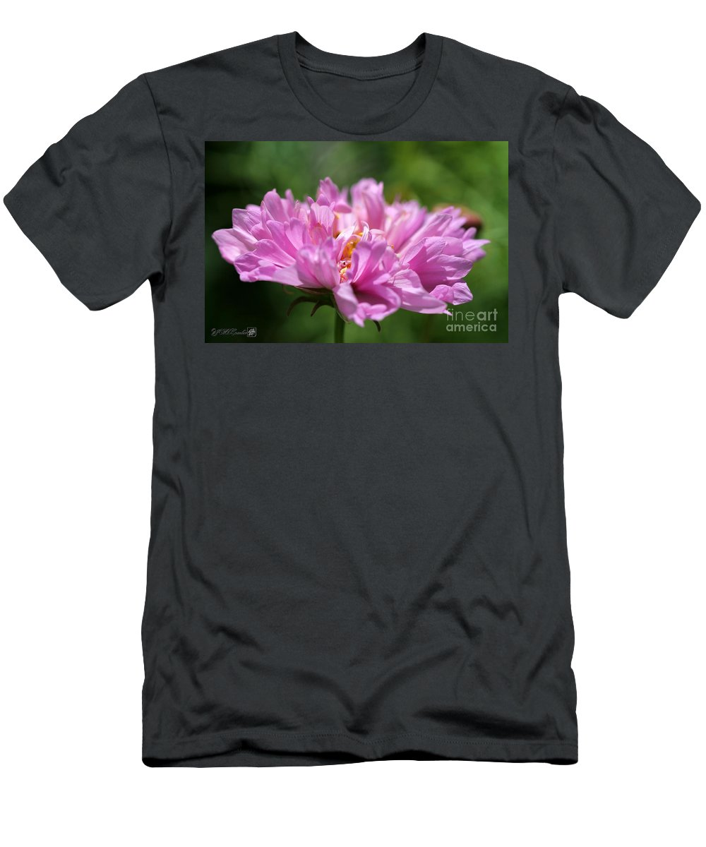 Mccombie Men's T-Shirt (Athletic Fit) featuring the photograph Double Click Cosmos Named Rose Bonbon by J McCombie