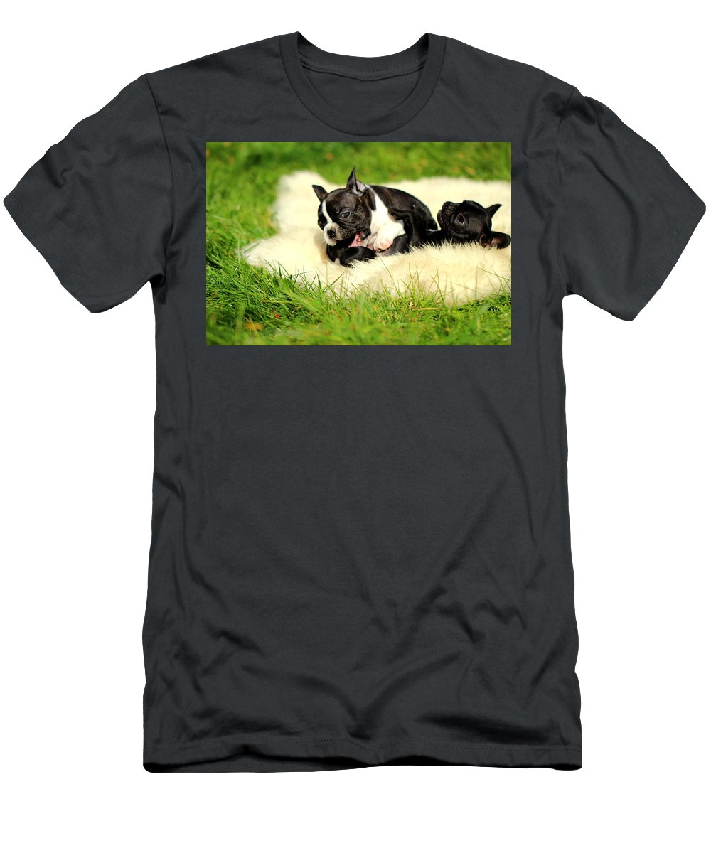 French Bulldogs Men's T-Shirt (Athletic Fit) featuring the photograph French Bulldoggs by Heike Hultsch