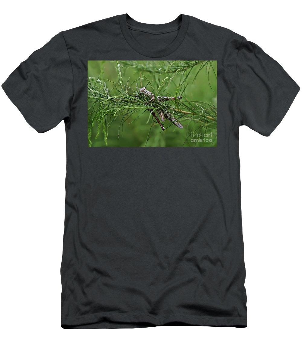 Grasshopper Men's T-Shirt (Athletic Fit) featuring the photograph Grasshopper by Olga Hamilton
