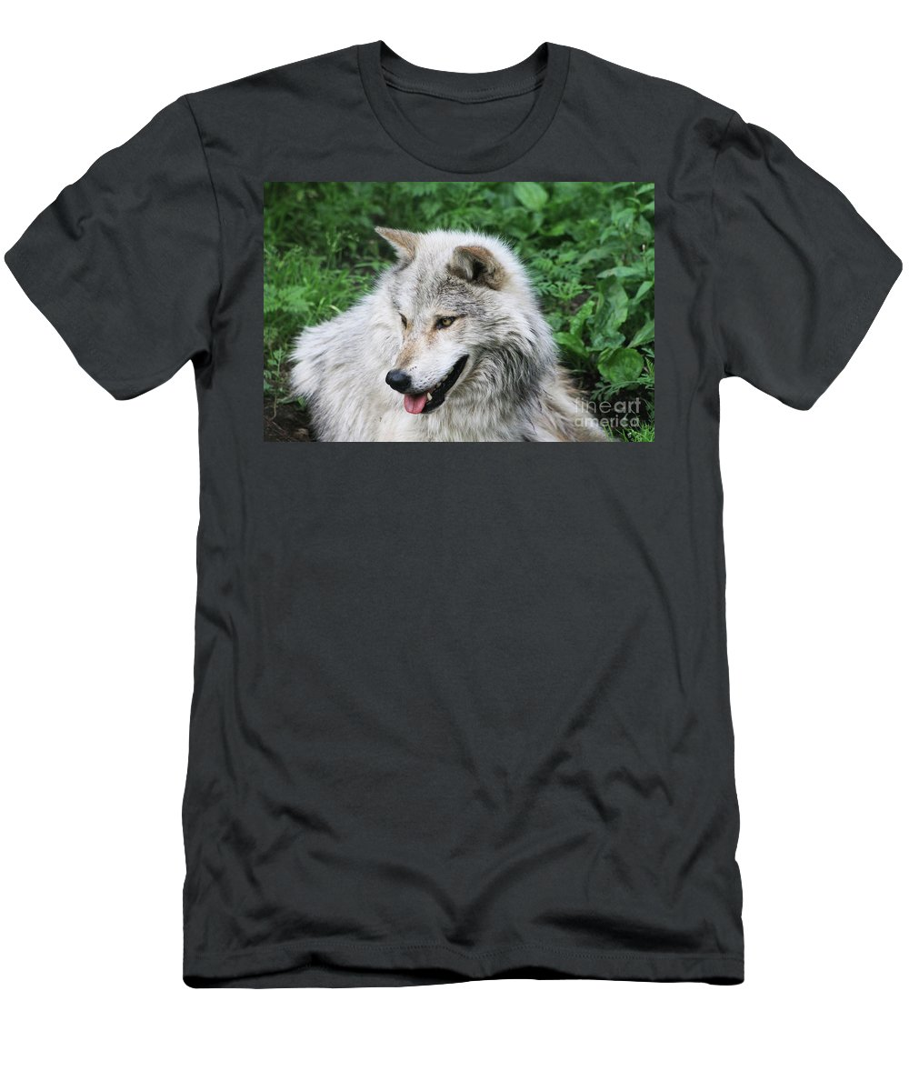 Animal Men's T-Shirt (Athletic Fit) featuring the photograph Gray Wolf by Alyce Taylor