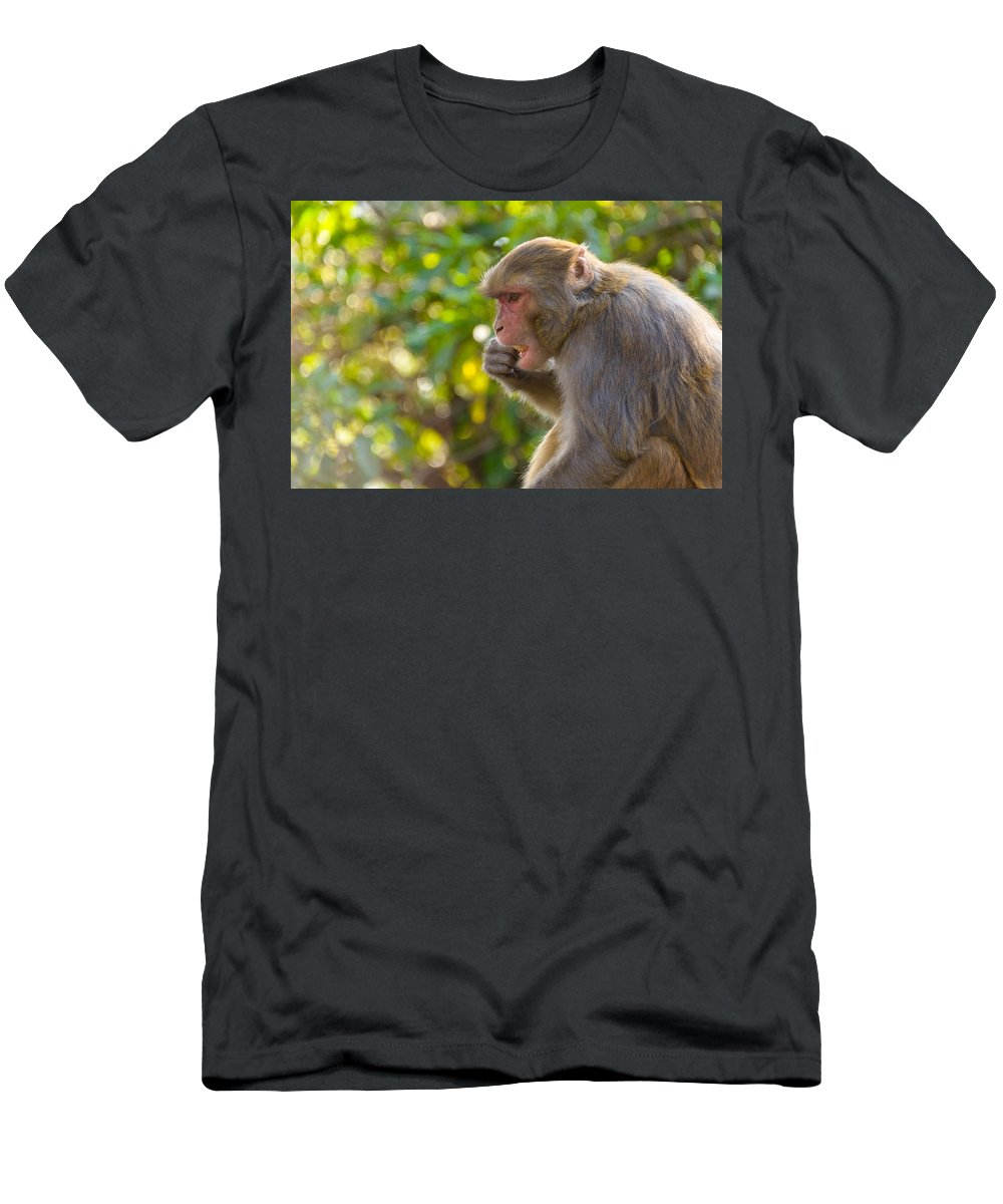 Macaque Men's T-Shirt (Athletic Fit) featuring the photograph Macaque Eating An Orange by Dutourdumonde Photography