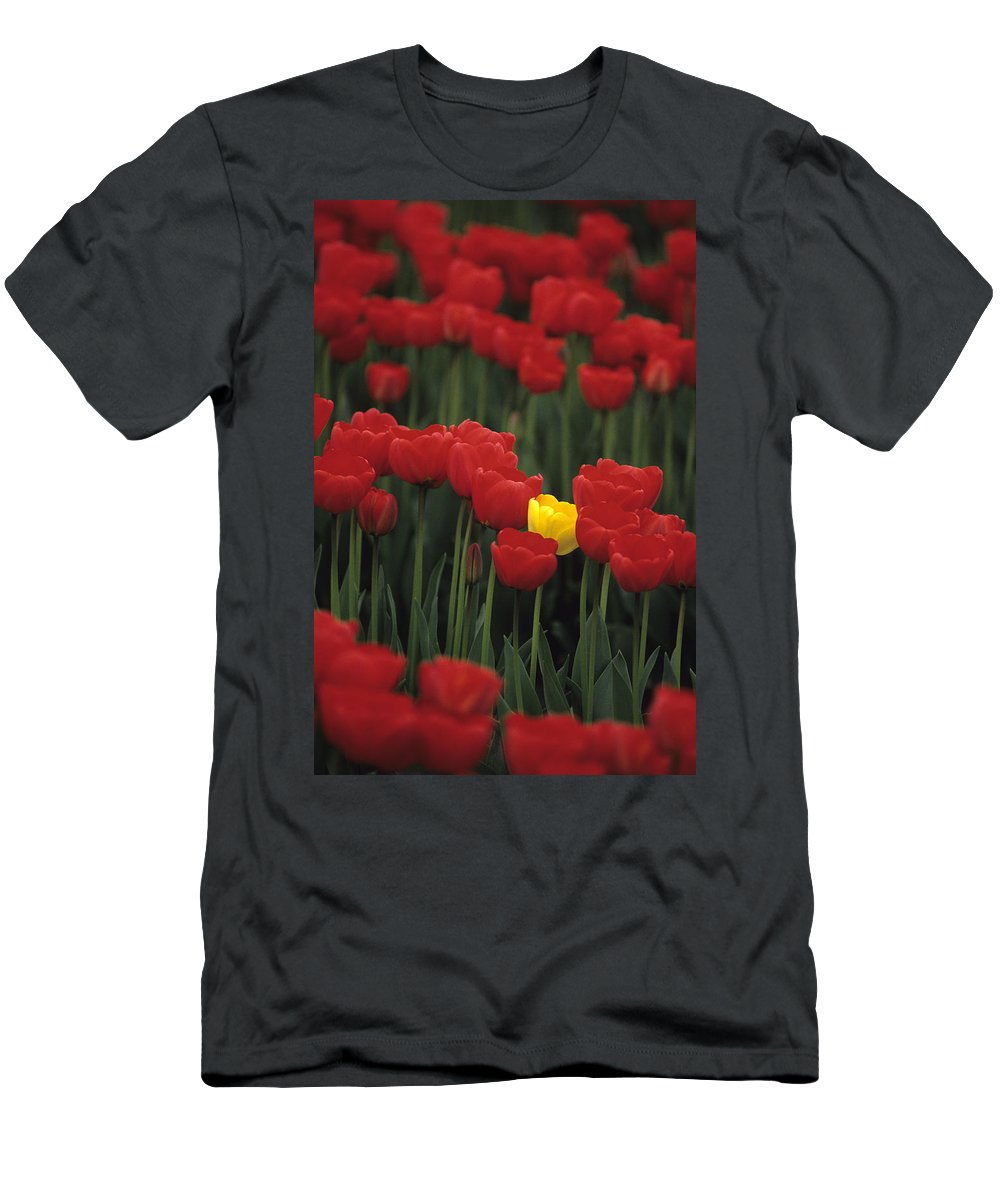 Travel Men's T-Shirt (Athletic Fit) featuring the photograph Rows Of Red Tulips With One Yellow Tulip by Jim Corwin