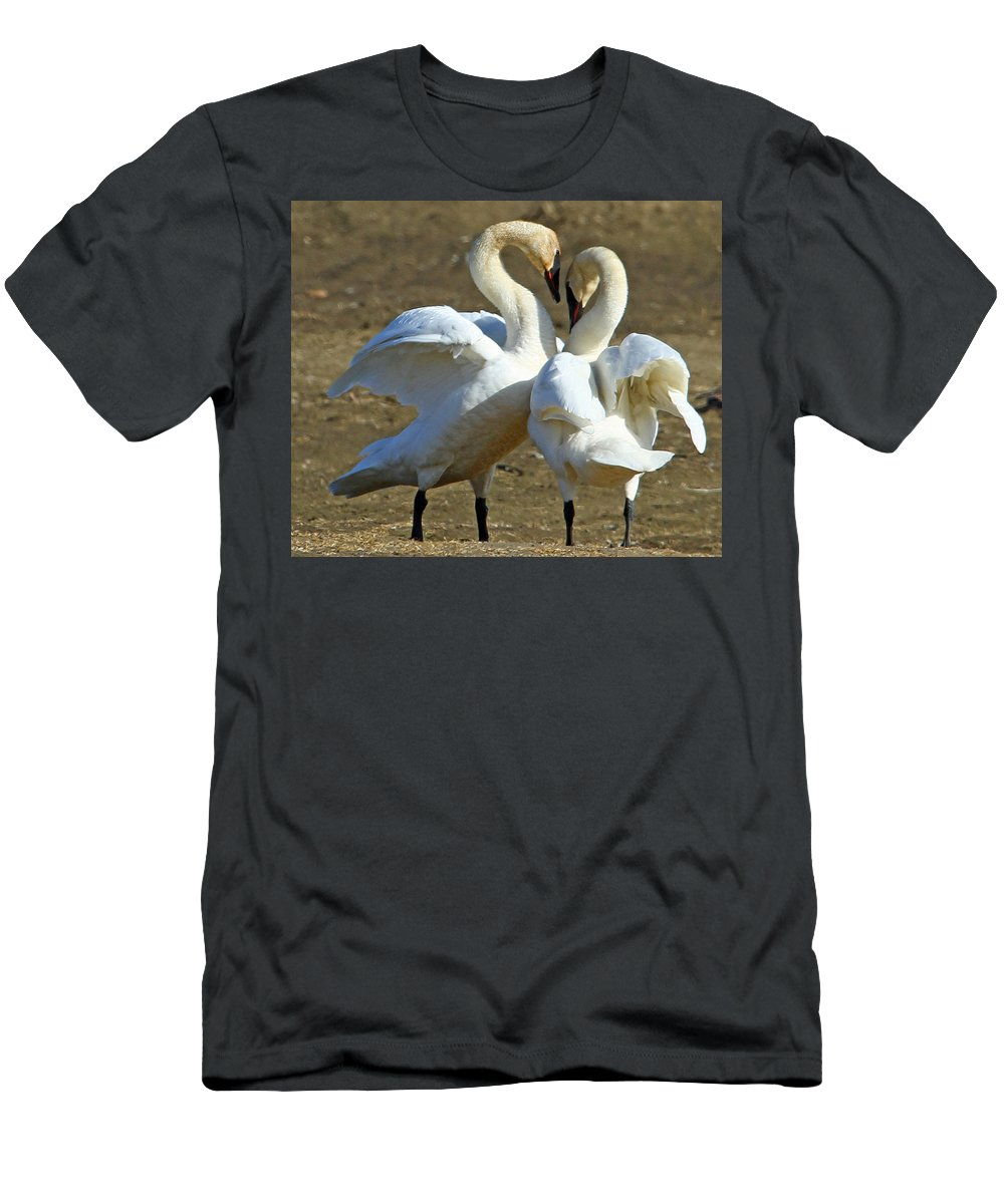Swan Men's T-Shirt (Athletic Fit) featuring the photograph Spring Dance by Dee Carpenter