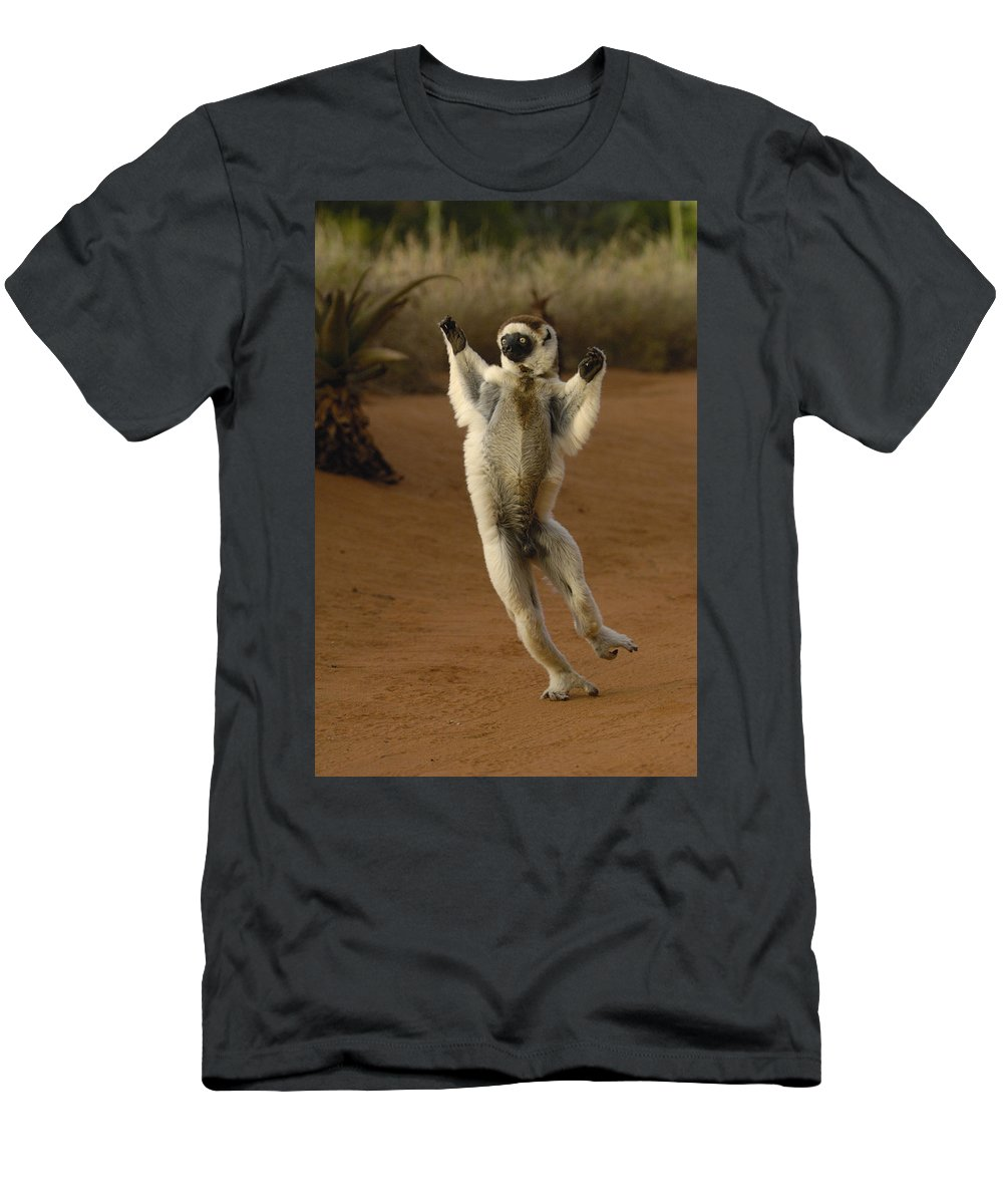 Feb0514 Men's T-Shirt (Athletic Fit) featuring the photograph Verreauxs Sifaka Hopping Berenty by Pete Oxford