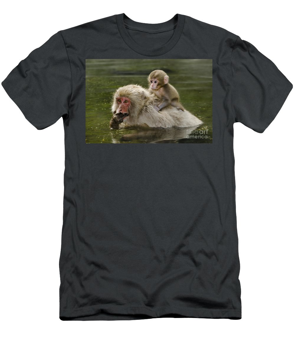 Asia Men's T-Shirt (Athletic Fit) featuring the photograph Snow Monkeys, Japan by John Shaw