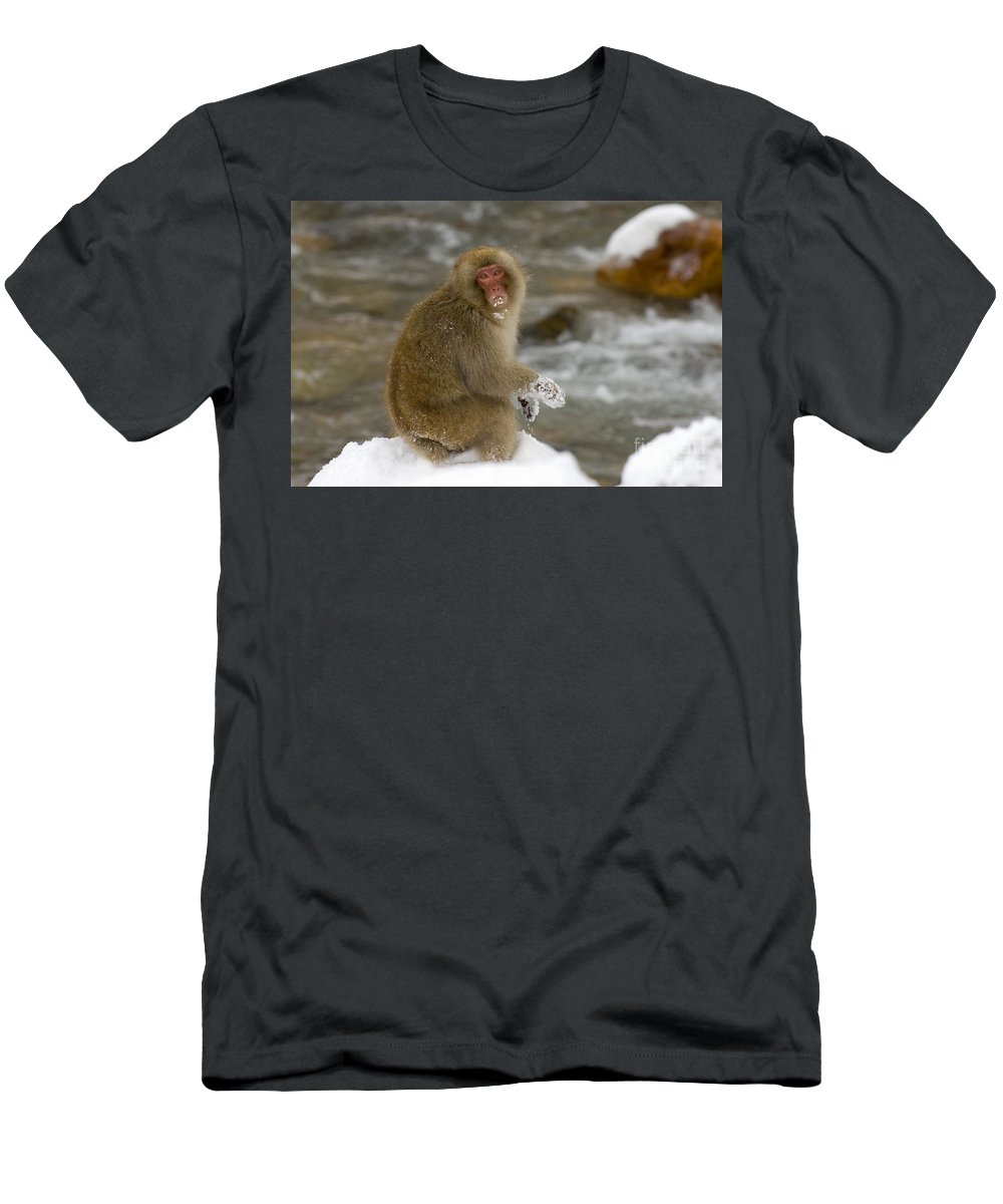 Japanese Macaque Men's T-Shirt (Athletic Fit) featuring the photograph Japanese Macaque by John Shaw