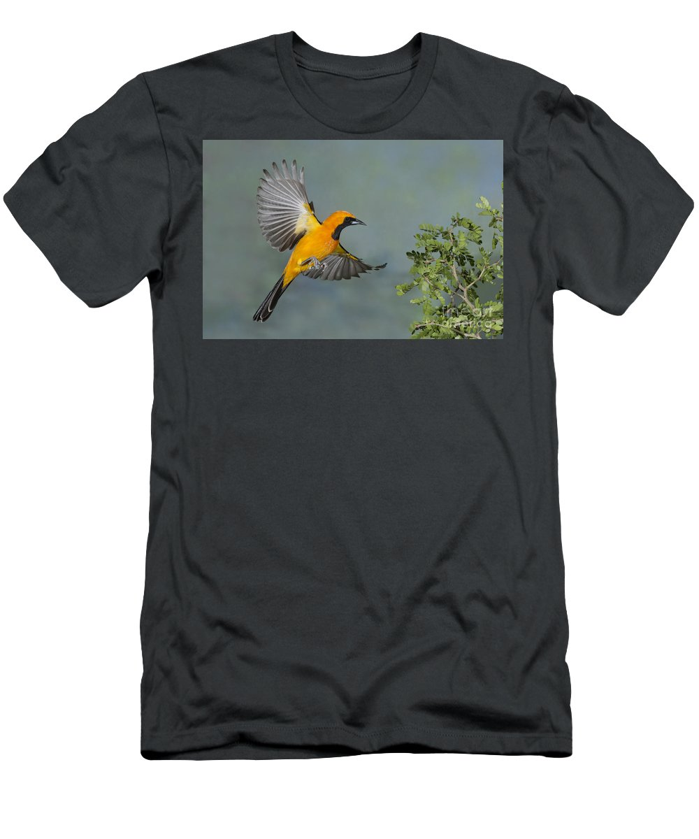 Hooded Oriole Men's T-Shirt (Athletic Fit) featuring the photograph Hooded Oriole by Anthony Mercieca