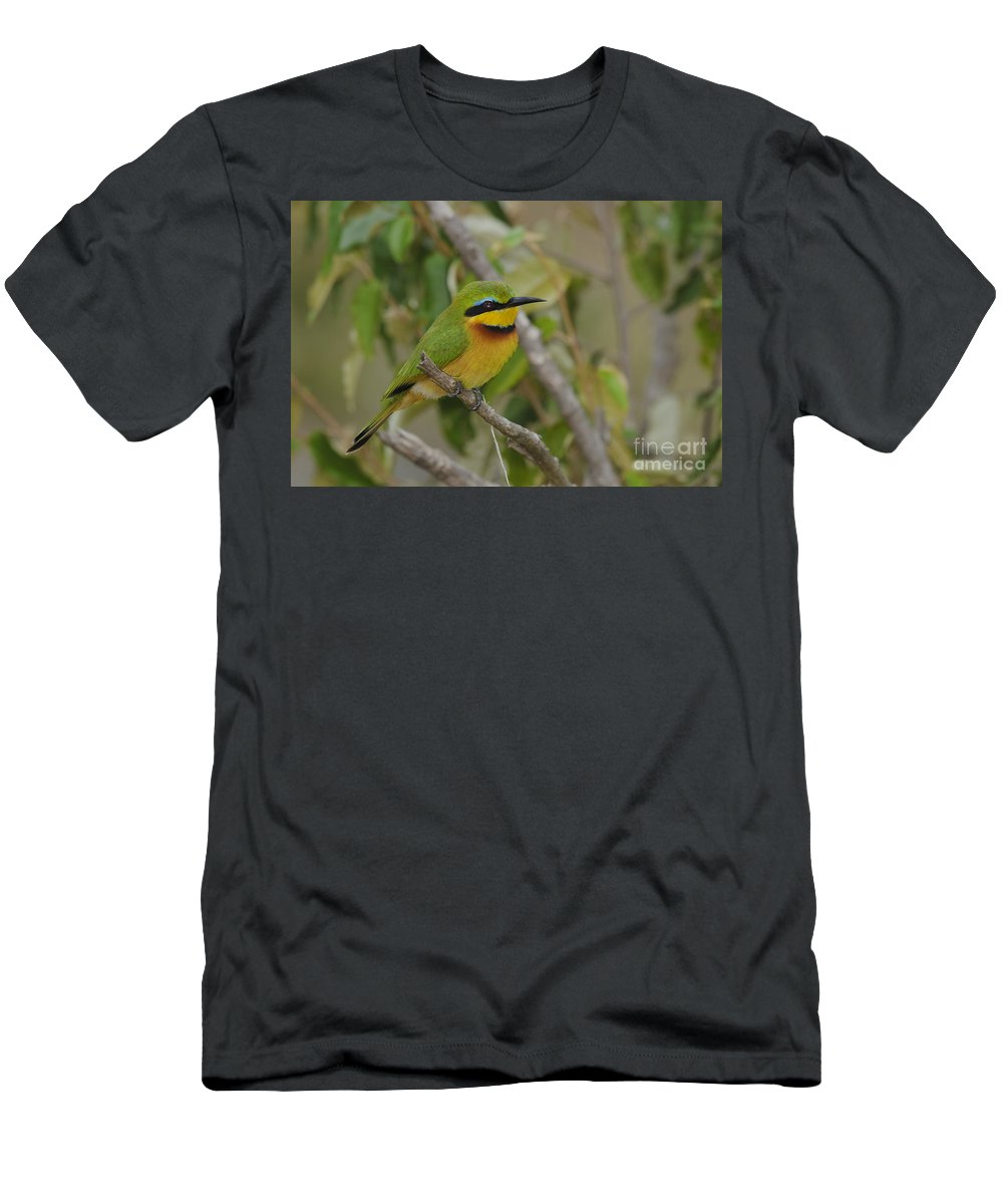 African Fauna Men's T-Shirt (Athletic Fit) featuring the photograph Little Bee-eater by John Shaw