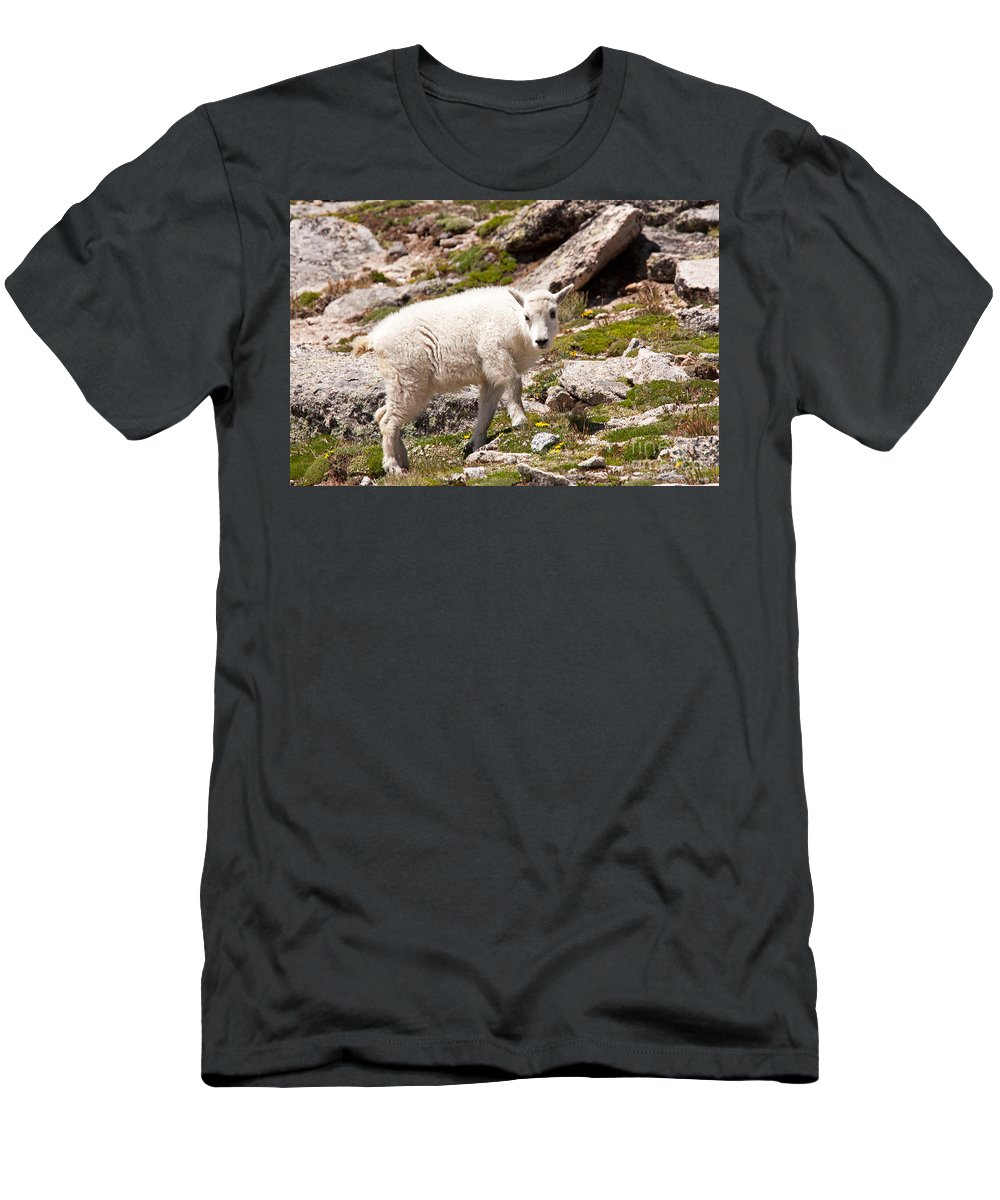 Arapaho National Forest Men's T-Shirt (Athletic Fit) featuring the photograph Mountain Goat Kid On Mount Evans by Fred Stearns
