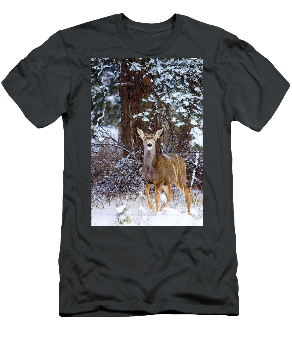 Beautiful Men's T-Shirt (Athletic Fit) featuring the photograph Mule Deer In Snow by Steve Krull