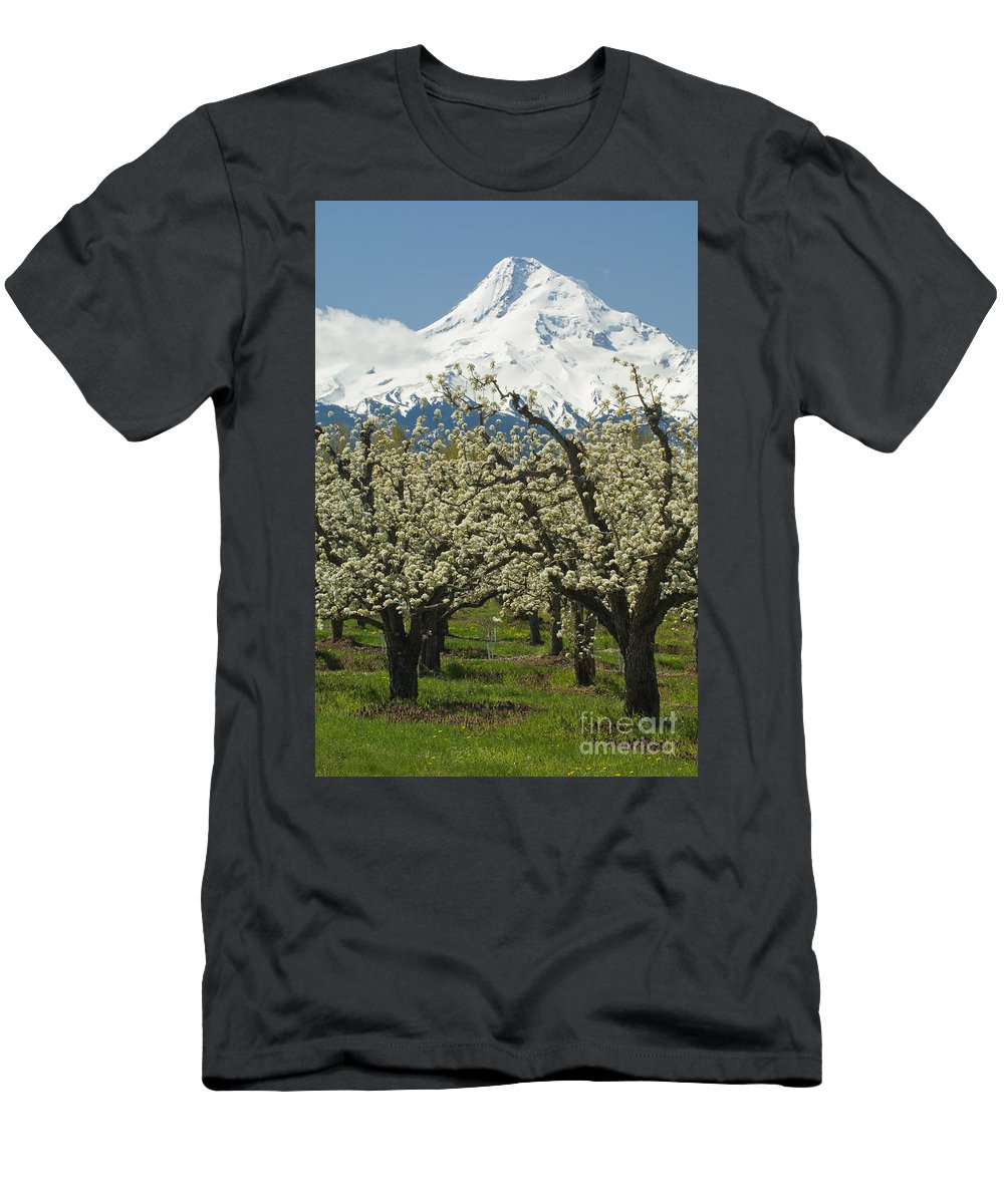 Orchard Men's T-Shirt (Athletic Fit) featuring the photograph Orchard And Mount Hood, Oregon by John Shaw