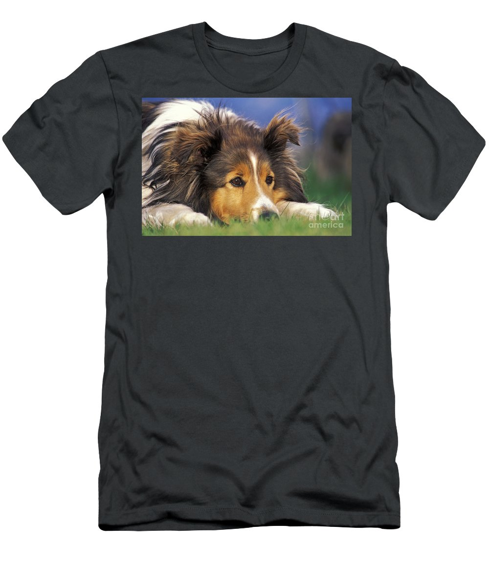 Dog Men's T-Shirt (Athletic Fit) featuring the photograph Shetland Sheepdog by Rolf Kopfle