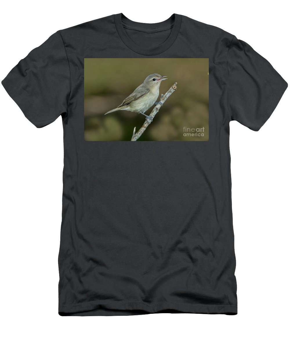Warbling Vireo Men's T-Shirt (Athletic Fit) featuring the photograph Warbling Vireo by Anthony Mercieca