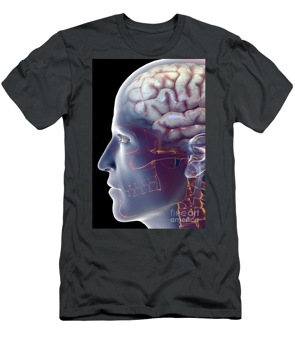 Central Sulcus Men's T-Shirt (Athletic Fit) featuring the photograph Human Brain by Science Picture Co