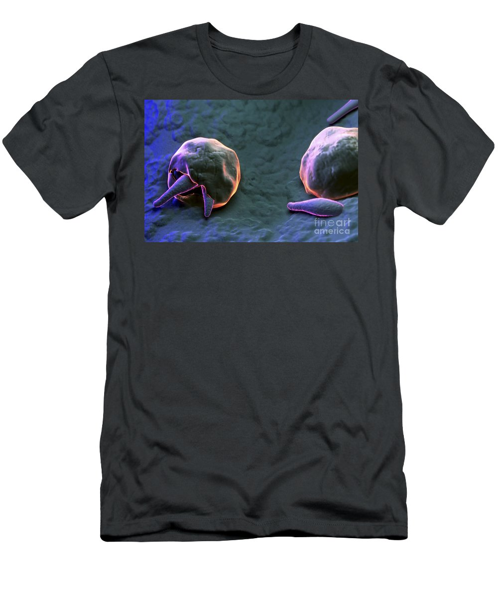 3d Visualization Men's T-Shirt (Athletic Fit) featuring the photograph Cryptosporidium by Science Picture Co