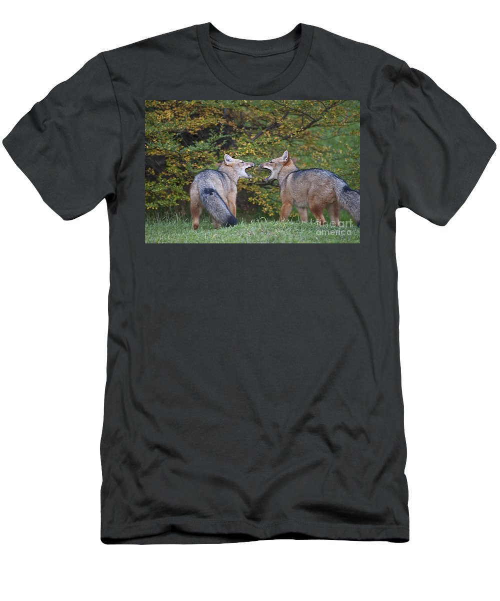 Chilean Fauna Men's T-Shirt (Athletic Fit) featuring the photograph Patagonian Red Fox by John Shaw