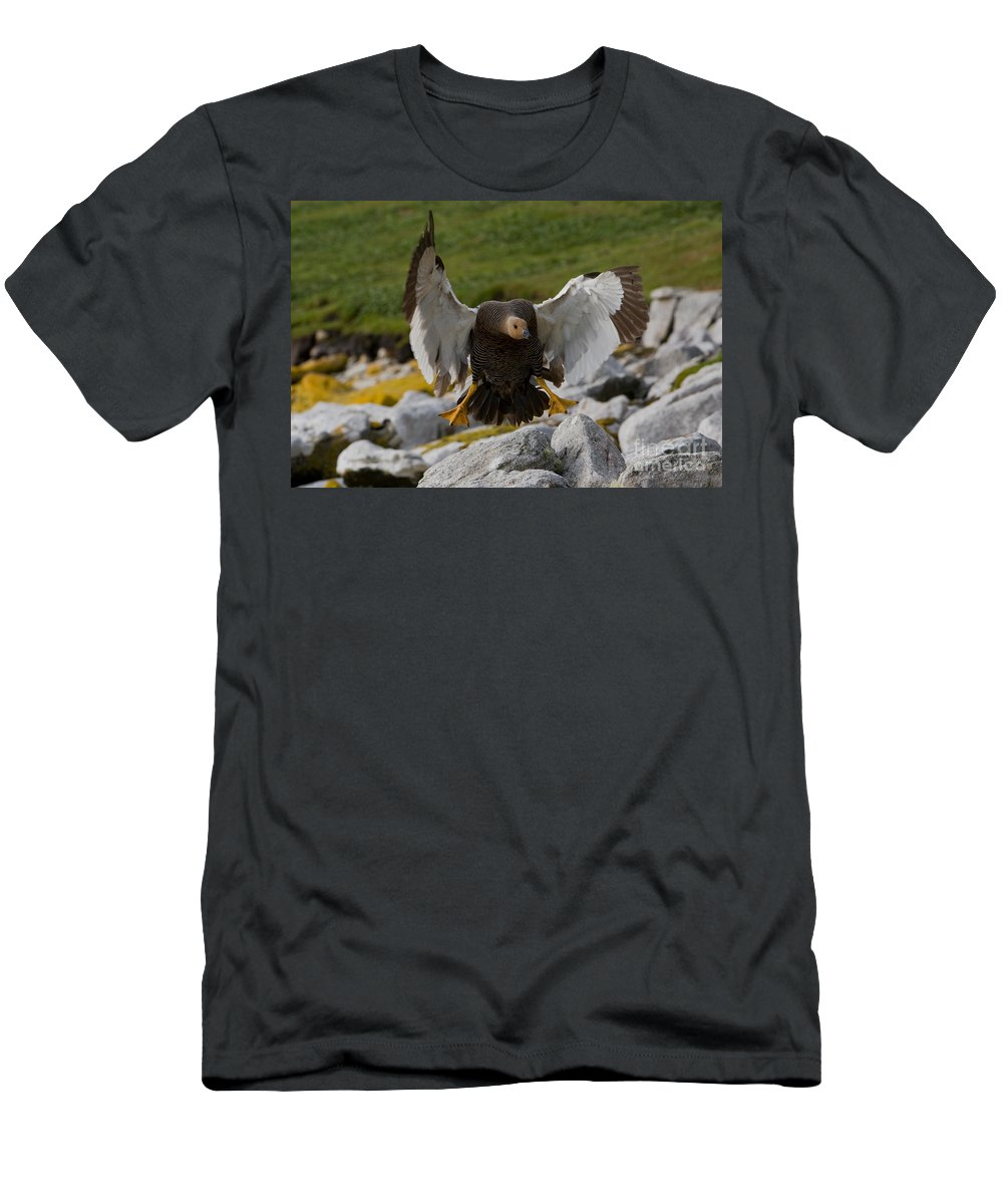 Upland Goose Men's T-Shirt (Athletic Fit) featuring the photograph Upland Goose by John Shaw
