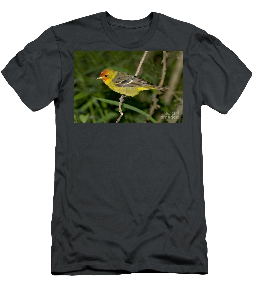 Western Tanager Men's T-Shirt (Athletic Fit) featuring the photograph Western Tanager by Anthony Mercieca