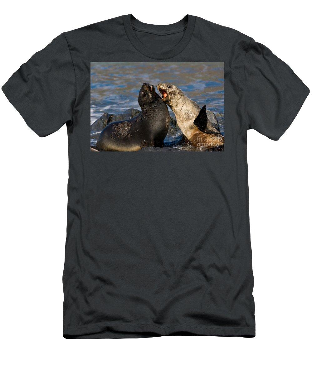 Antarctic Fur Seal Men's T-Shirt (Athletic Fit) featuring the photograph Antarctic Fur Seals by John Shaw