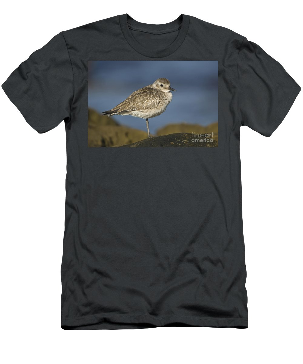 Black-bellied Plover Men's T-Shirt (Athletic Fit) featuring the photograph Black-bellied Plover by John Shaw