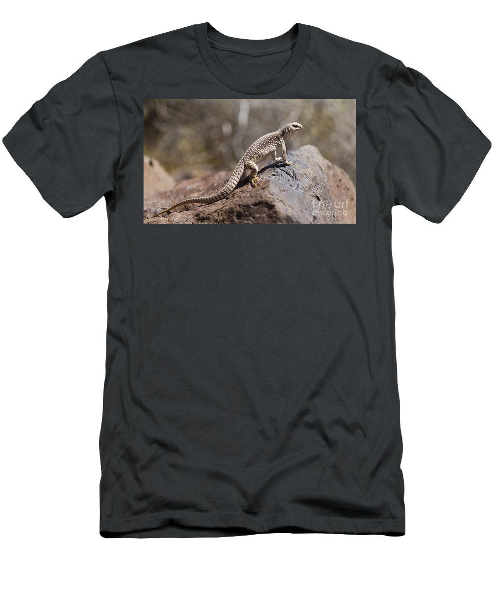 Mojave Desert Iguana Men's T-Shirt (Athletic Fit) featuring the photograph Mojave Desert Iguana by B Christopher