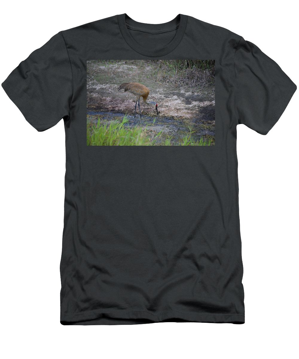 Feeding. Florida Men's T-Shirt (Athletic Fit) featuring the photograph Sandhill Crane by Robert Floyd