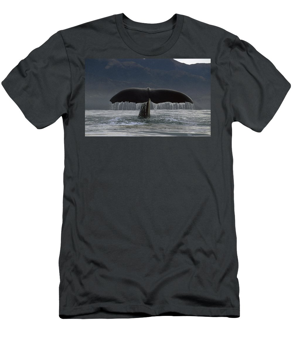 Feb0514 Men's T-Shirt (Athletic Fit) featuring the photograph Sperm Whale Tail New Zealand by Flip Nicklin