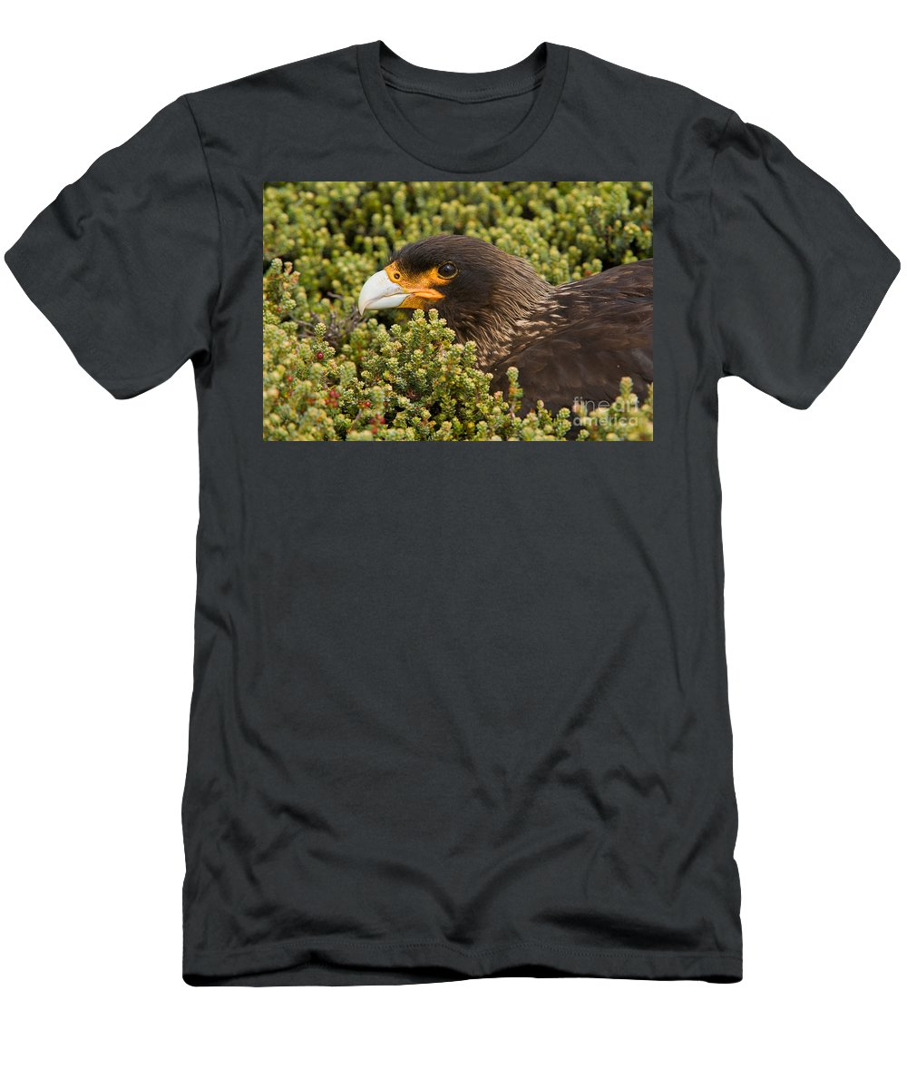Striated Caracara Men's T-Shirt (Athletic Fit) featuring the photograph Striated Caracara by John Shaw