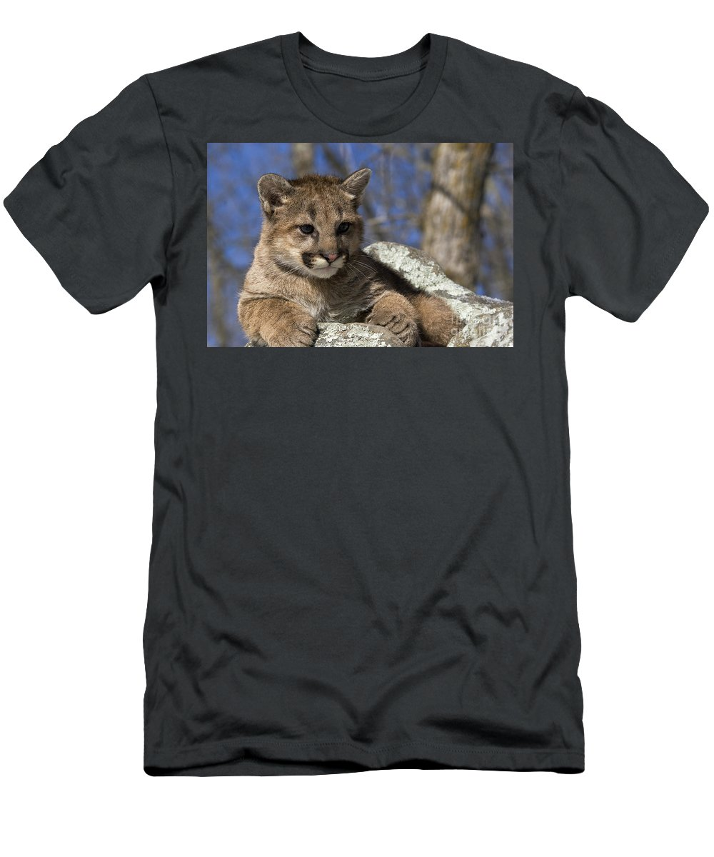 Face Men's T-Shirt (Athletic Fit) featuring the photograph Cougar Cub by Linda Freshwaters Arndt