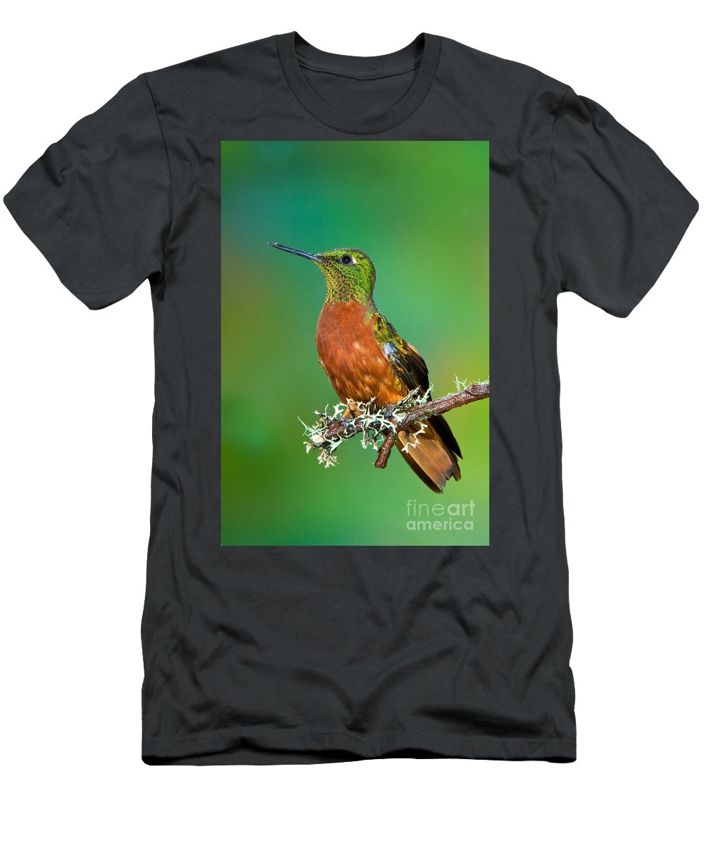 Animal Men's T-Shirt (Athletic Fit) featuring the photograph Chestnut-breasted Coronet by Anthony Mercieca