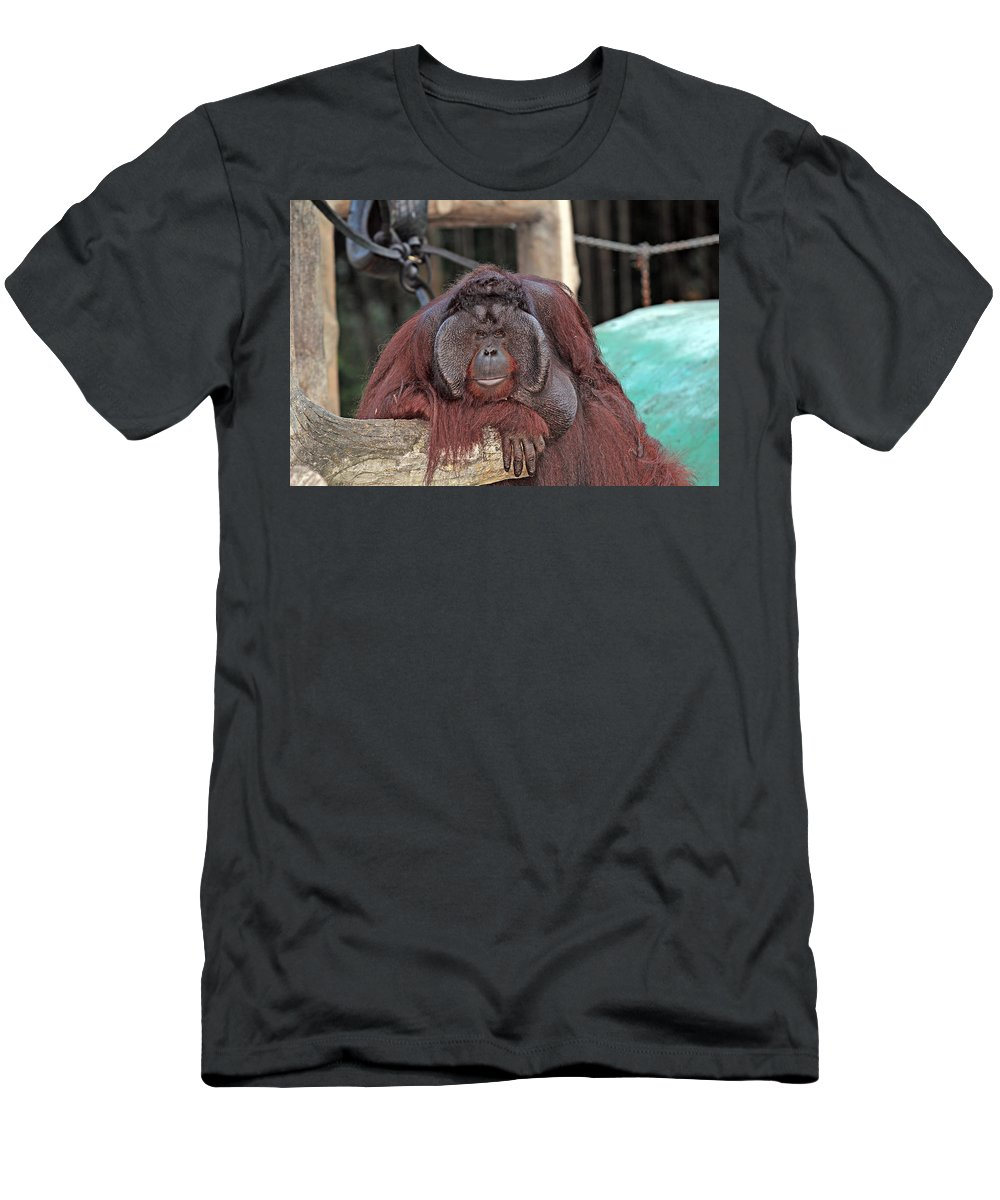 Animal Men's T-Shirt (Athletic Fit) featuring the photograph Portrait Of A Large Male Orangutan by Paul Fell