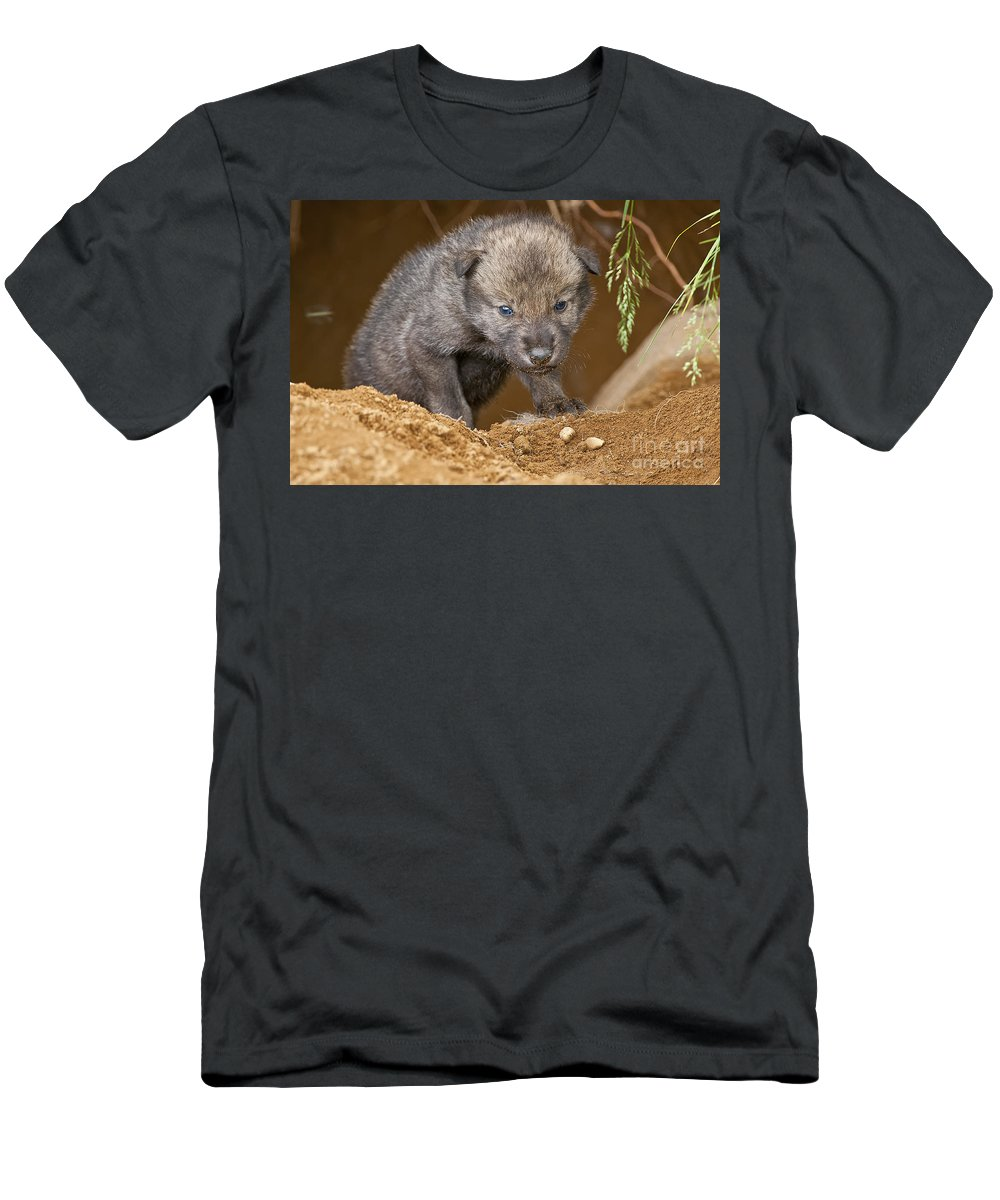 Timber Wolf Photography Men's T-Shirt (Athletic Fit) featuring the photograph Timber Wolf Pictures by Wolves Only