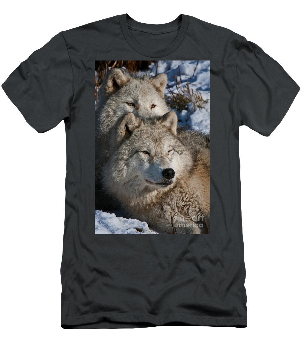 Arctic Wolf Photography Men's T-Shirt (Athletic Fit) featuring the photograph Arctic Wolves by Wolves Only