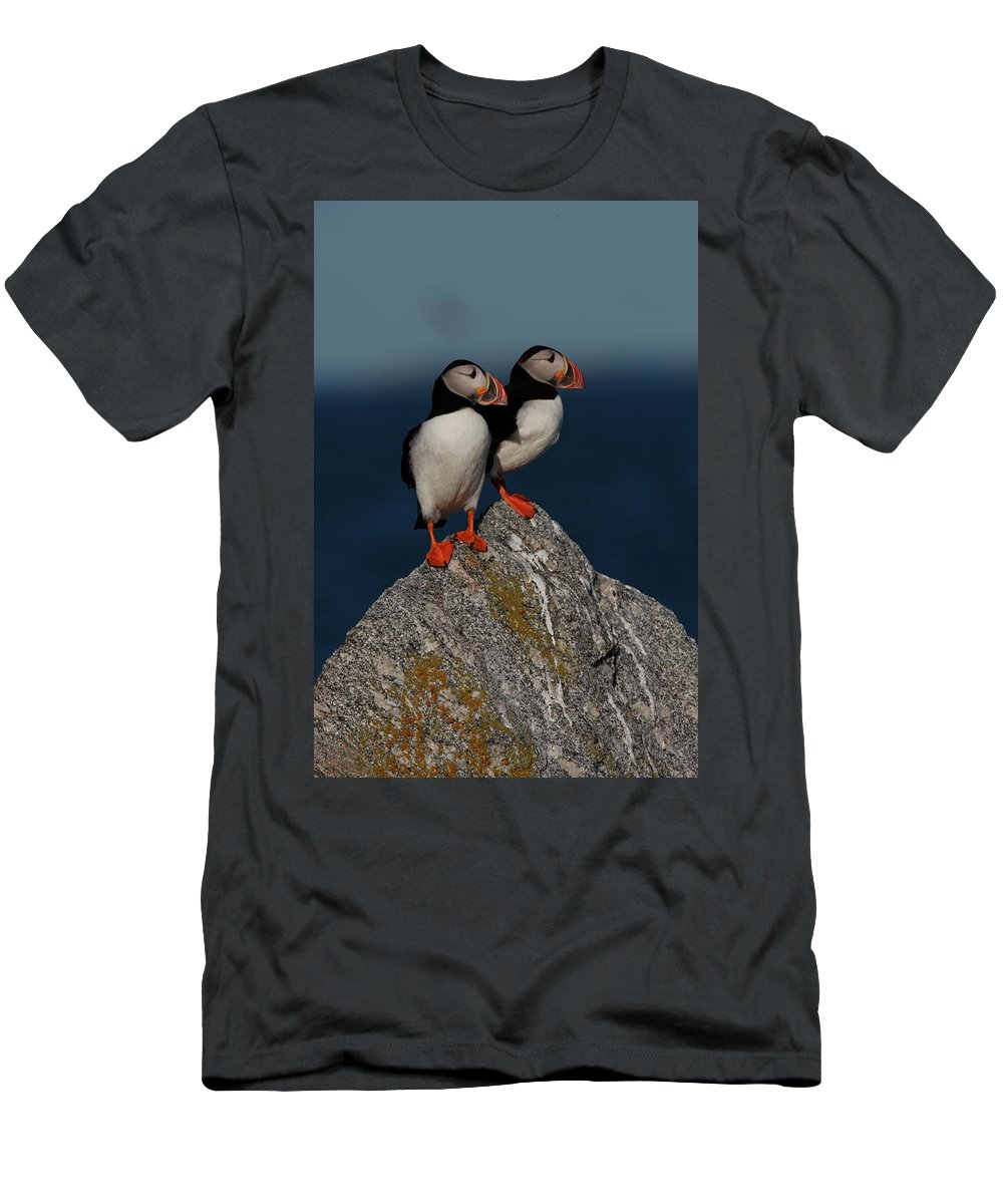 Atlantic Puffins Men's T-Shirt (Athletic Fit) featuring the photograph Atlantic Puffins Fratercula Arctica by Jose Azel