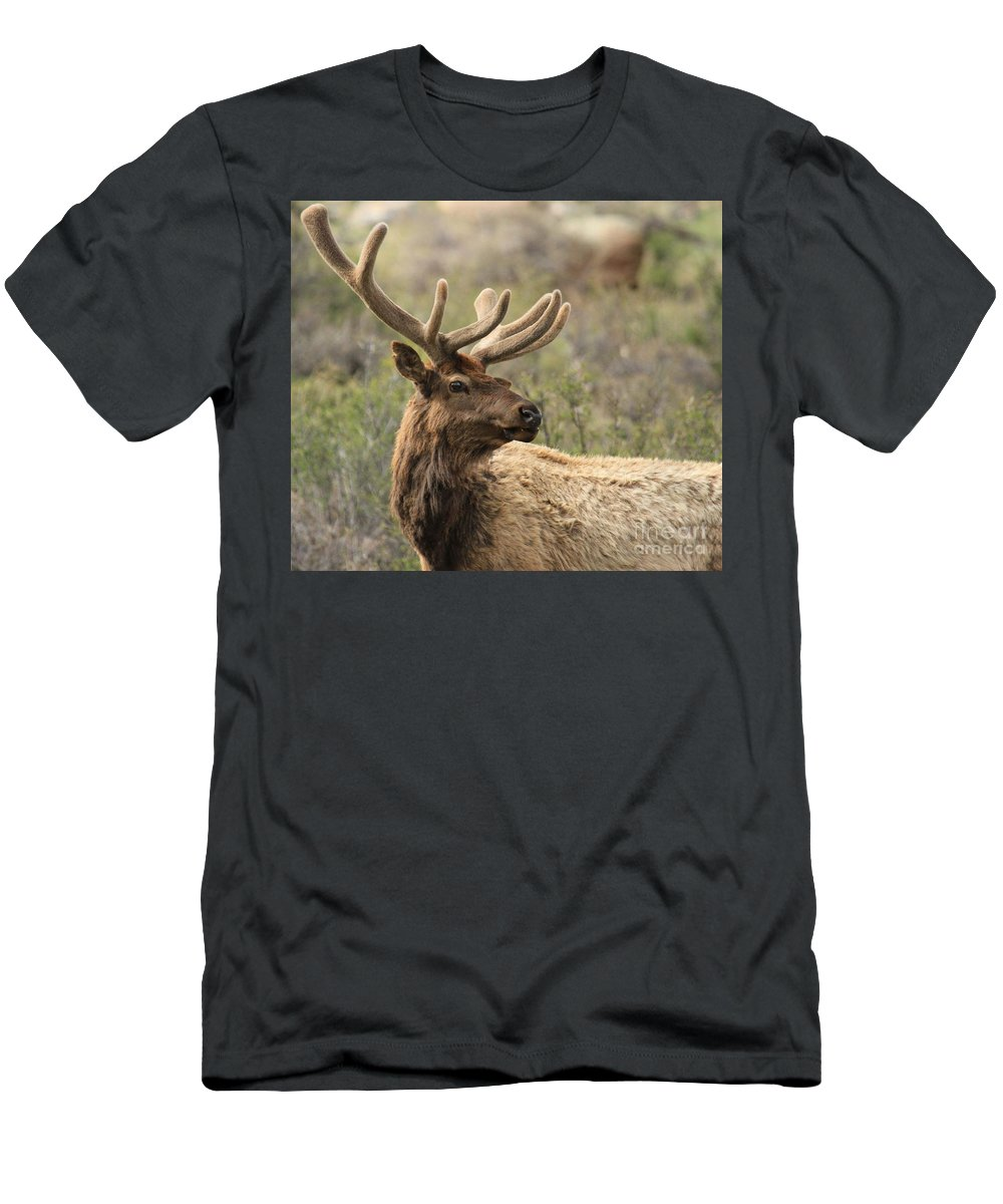 Rocky Mountain National Park Men's T-Shirt (Athletic Fit) featuring the photograph A Beautiful Young Rack by Adam Jewell